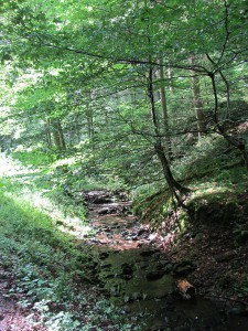 Soulfire Camp 2014 - Ehrbach-Zulauf