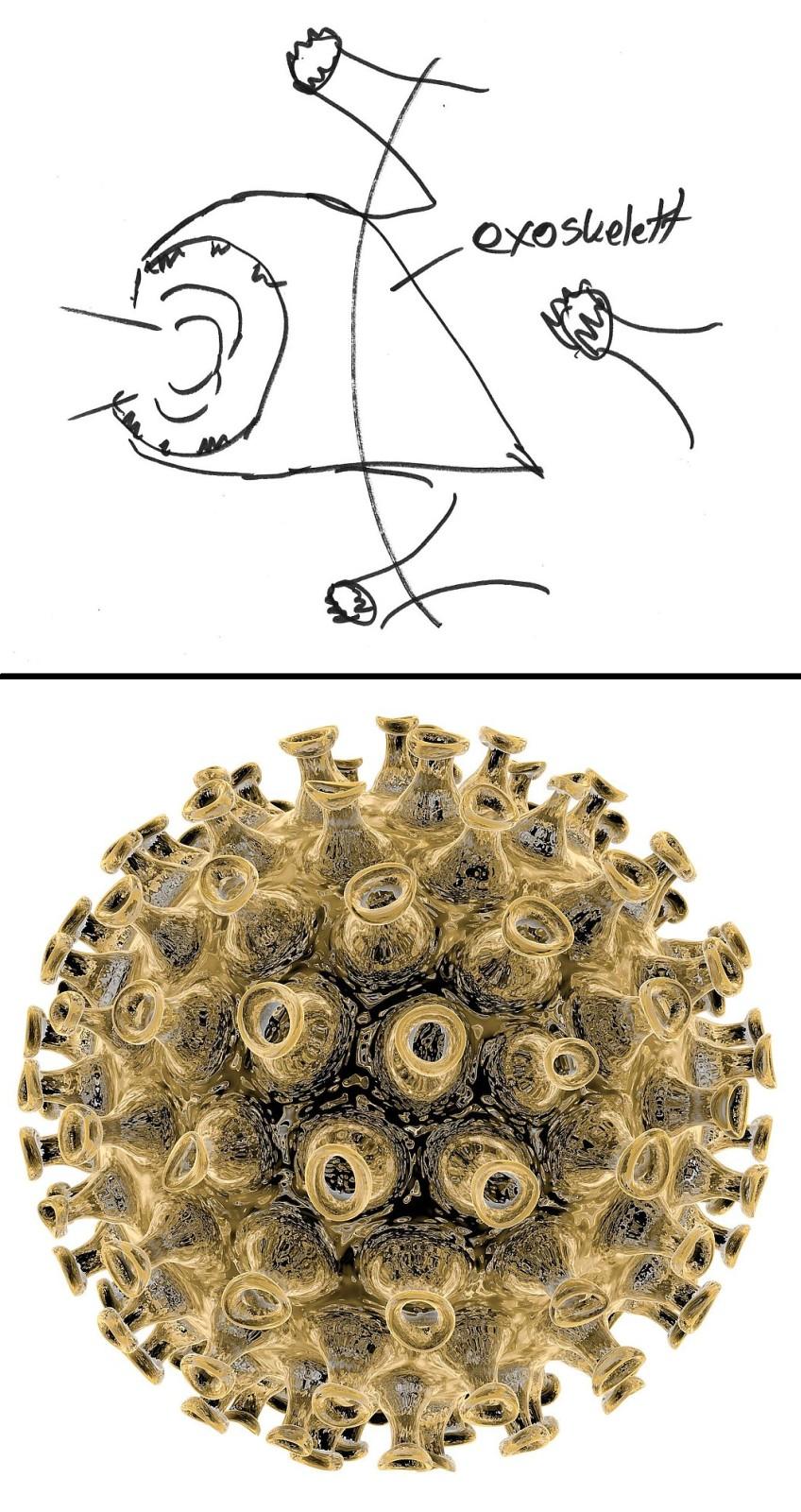 RV - Grippevirus